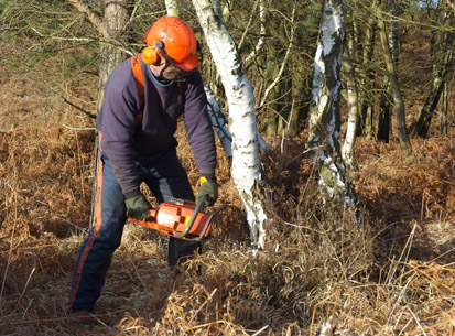 chainsawing worker birch heath