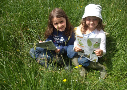 National Meadows Day - 2 July 2016