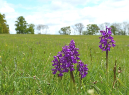 Local landowners give support for precious High Weald meadows