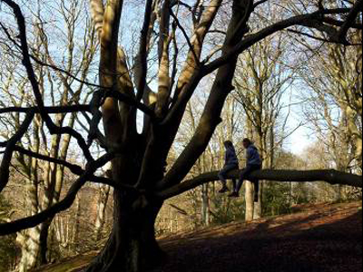 Dallington Forest Ancient and Veteran Tree Survey
