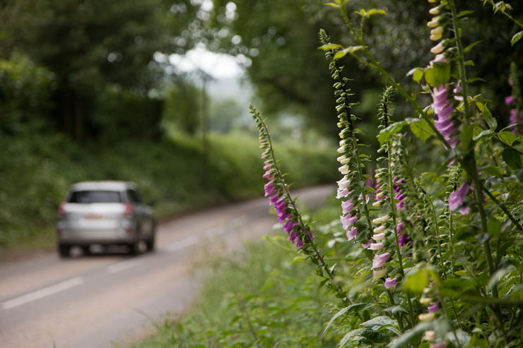 verge foxglove car bank