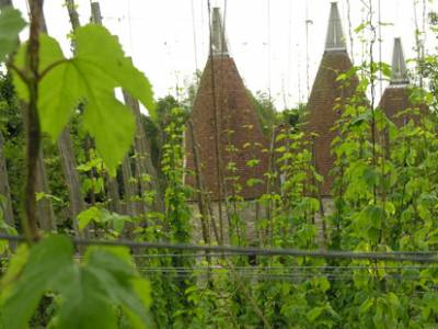 A hopfield and Oast house
