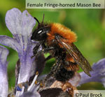 Rare bees found in Kent & Sussex Ancient Woodland