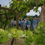 Biddenden vineyard tours, Kent