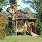 Tree house stay in Sussex