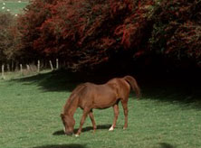 Guide to horse pasture management