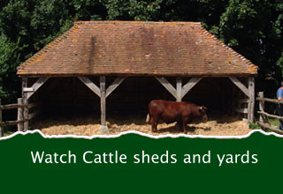Cattle sheds and yards