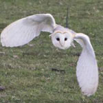 East Sussex falconry courses