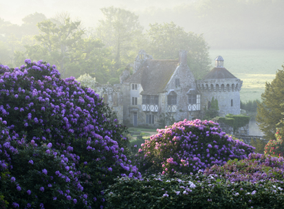 scotney_castle_rhododendron