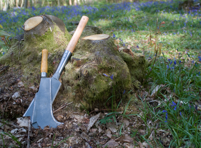 bill_hook_coppice_stump_sfw_413x305px