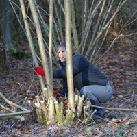 coppicing_volunteer