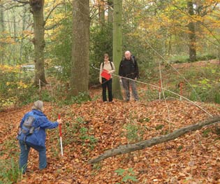 woodland_archaeology