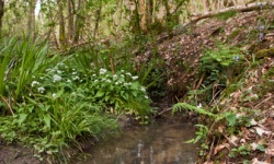 New guidance for Kent and Sussex woods